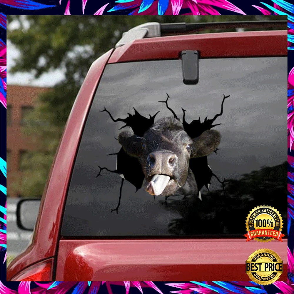 Angus Cow Crack Decal 4
